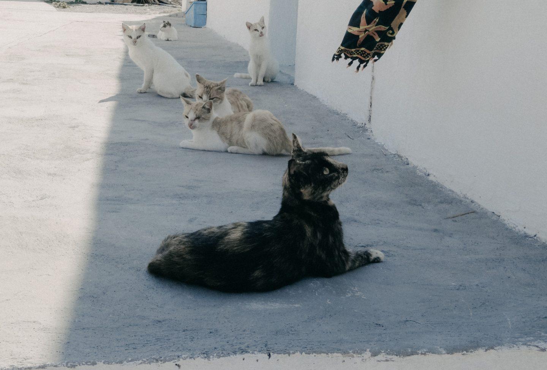 Katzen in Potamos, Antikythira, das einzige was sich tagsüber bewegt auf der kleinen stillen Insel.