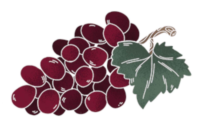 Weintraube Illustration by Tin.Eller Design