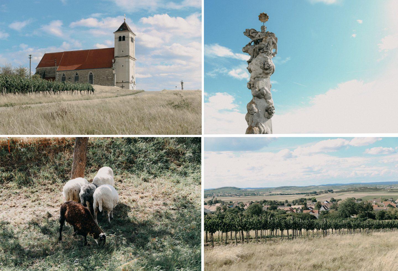 Idylle im kleinen Dorf Wartberg, Schafe, Weingärten, Kirche am Berg,alte Steyr Traktoren
