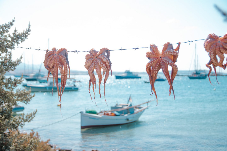 Tintenfische aufgehängt zum Trocknen