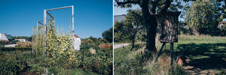 Stangenbohnen und Bienenstock