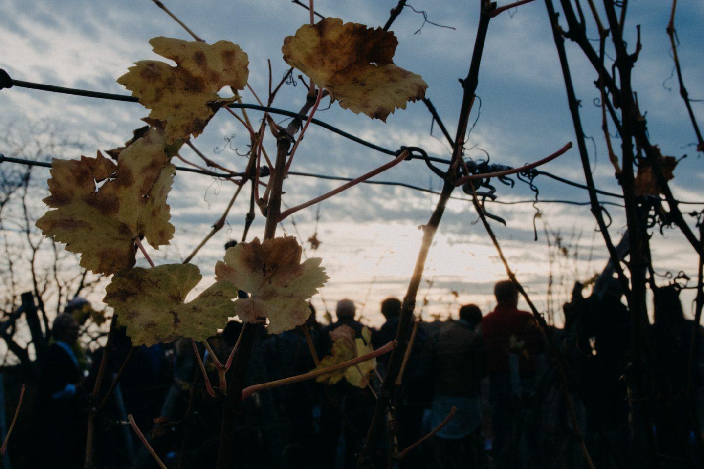 Herbsttage in der Südsteiermark