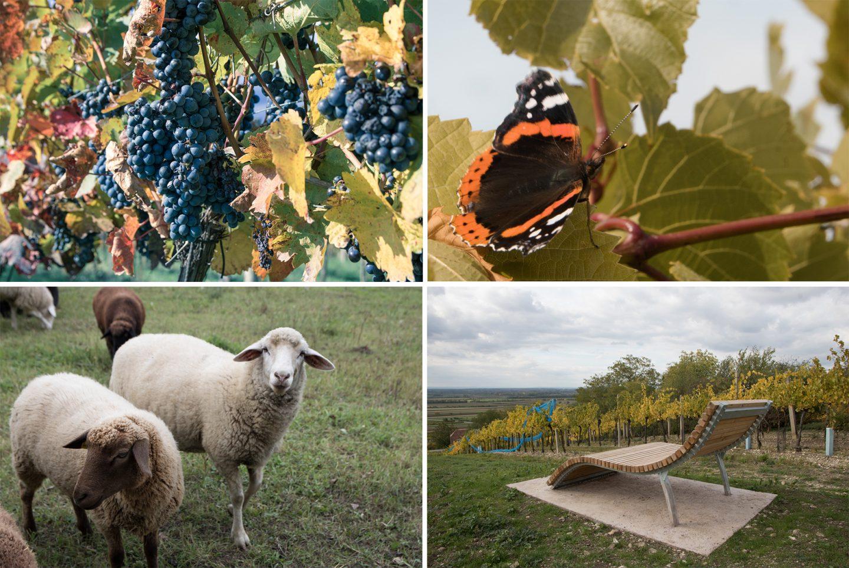 Herbst im Weinviertel