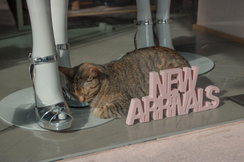Shopping in Valetta - Katze in der Auslage hinter dem Schriftzug New Arrivals