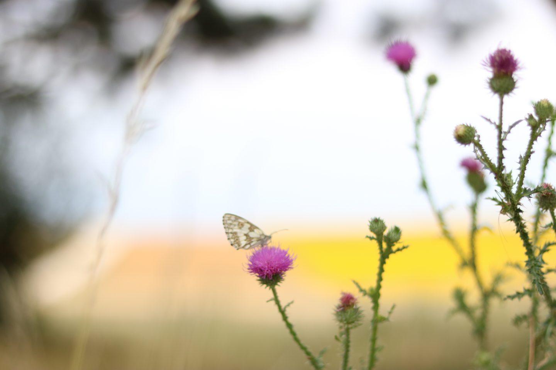 Leichtigkeit des Schmetterlings