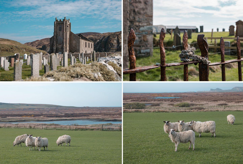 Kilchoman Church Islay, eine alte mystische Kirche mit eingestürztem Dach und einem alten Friedhof. Rundherum gibt es viele Schafe.