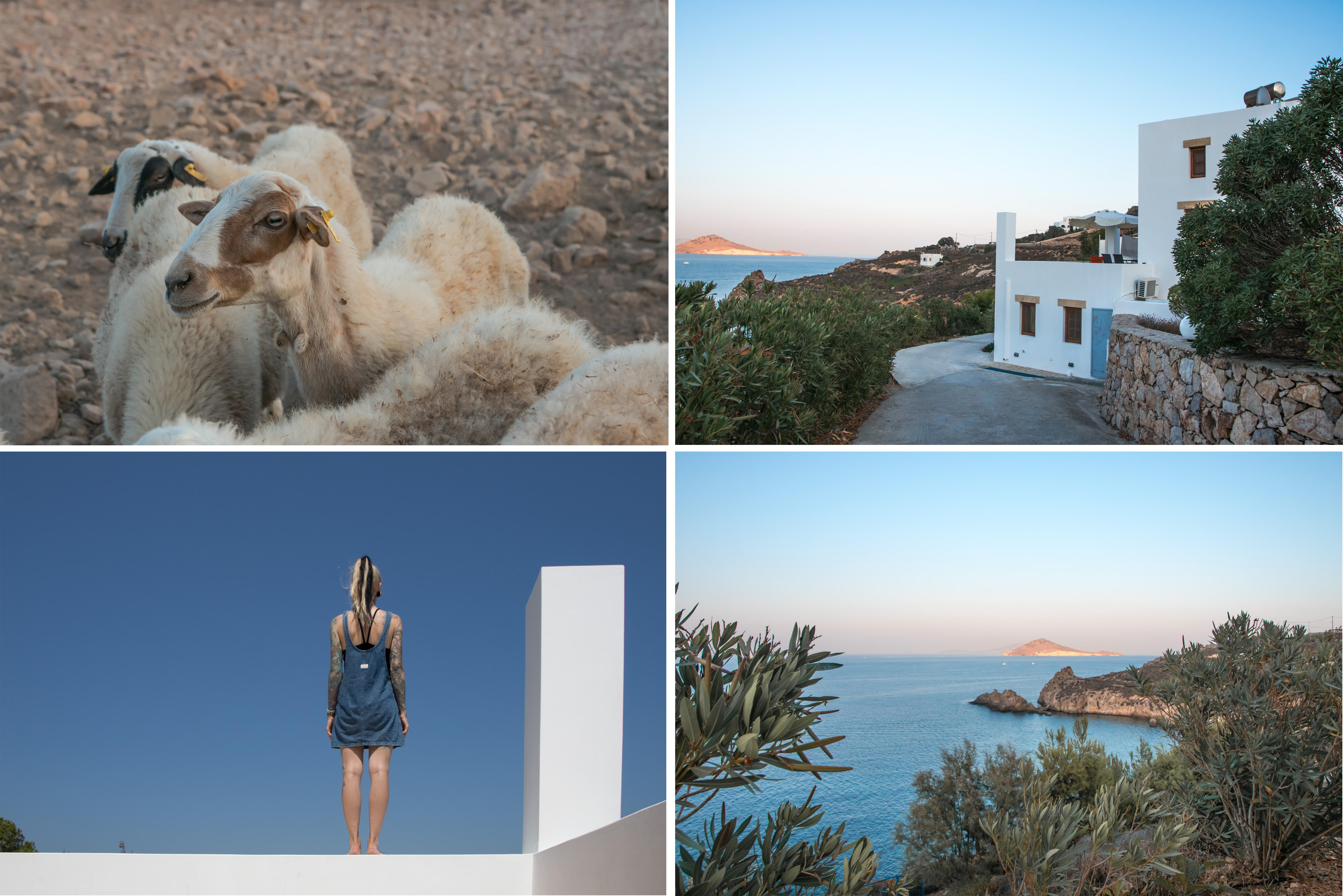 Patmos Garden Sea Apartments mit Kerstin und Schafen