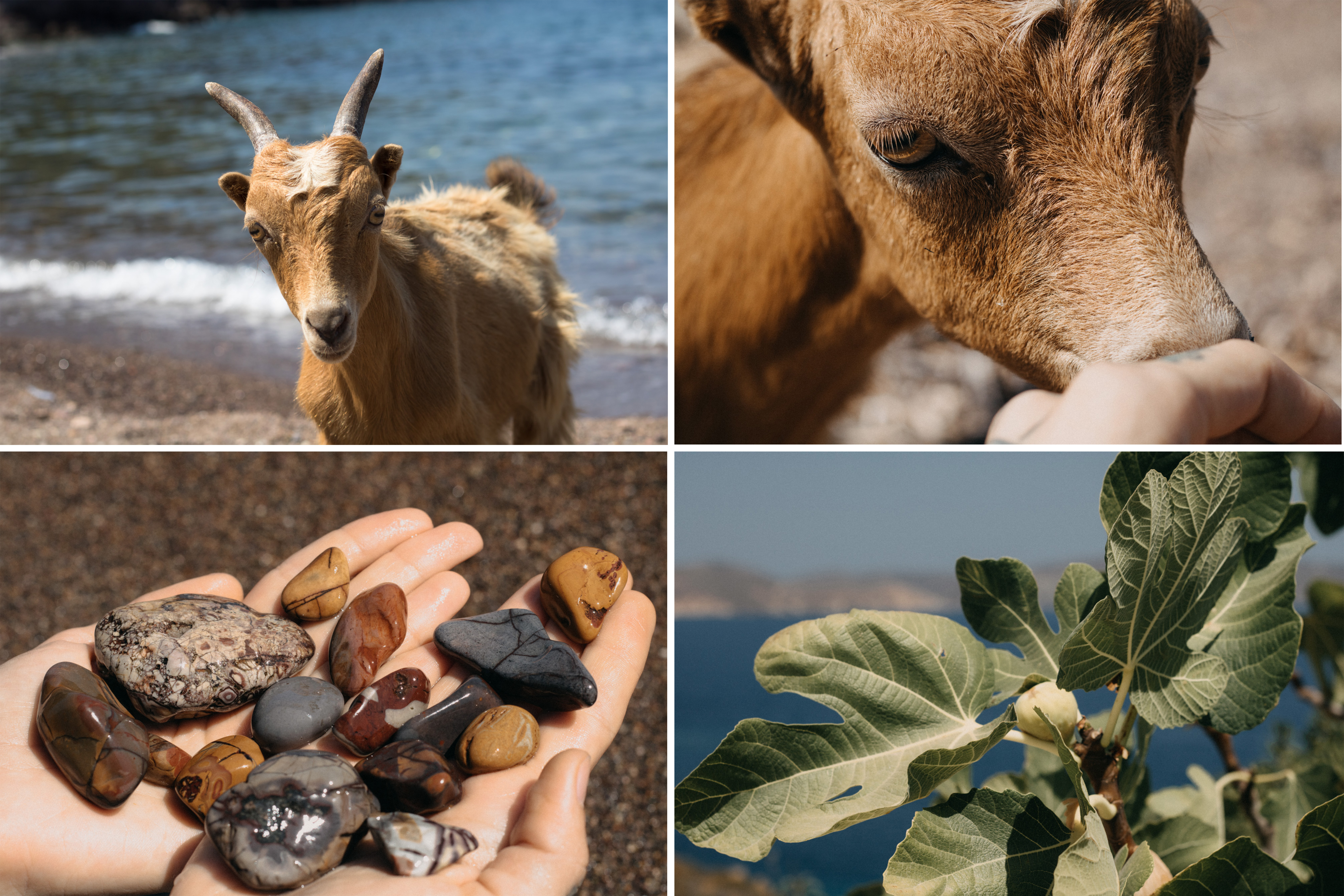 Livadi Kalogiron Strand mit kleiner Ziege, die sich streicheln lässt