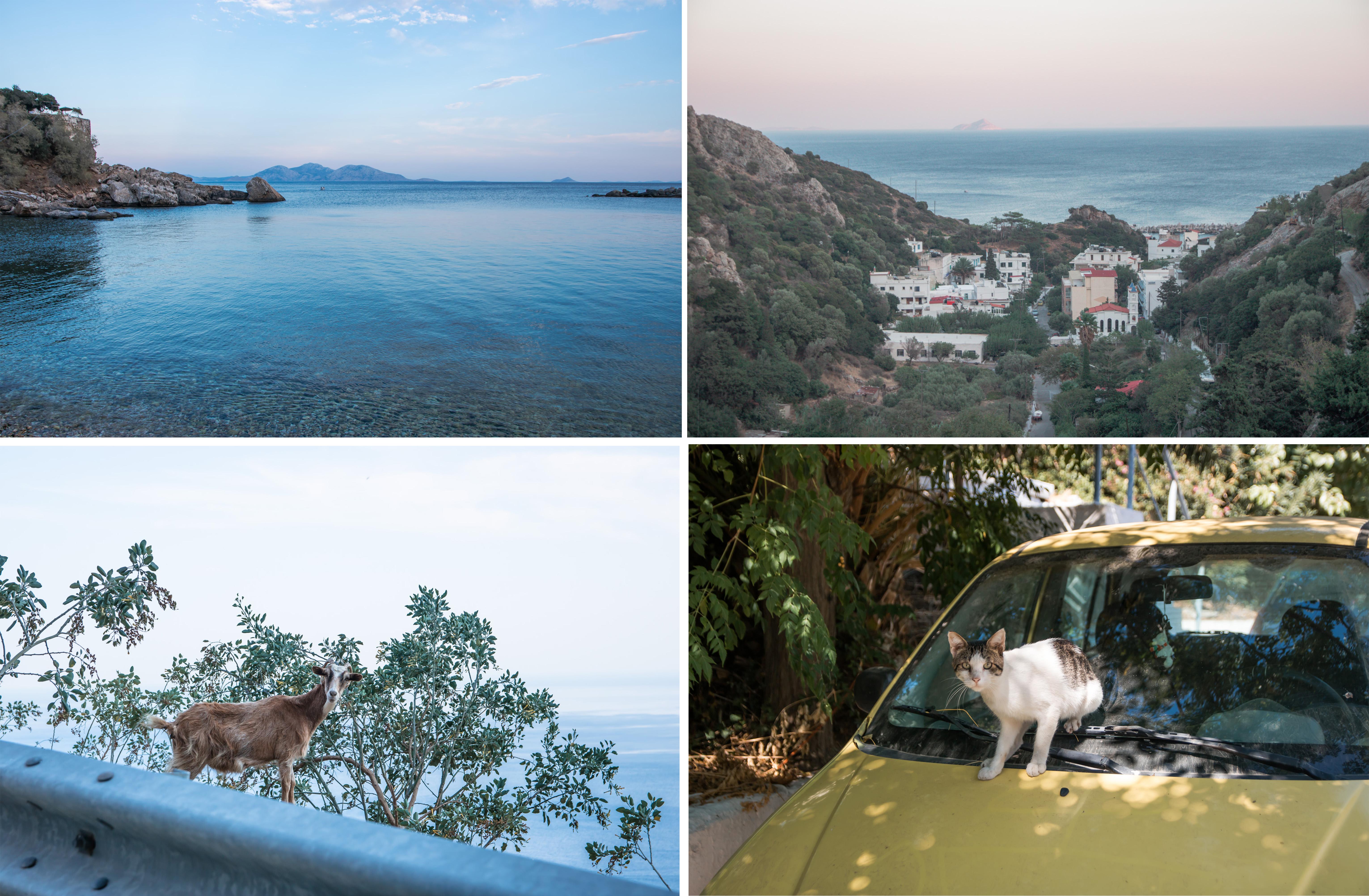 Therma, Ortschaft mit heißen Quellen und wunderschönem Meer. Katze am Auto und Ziege
