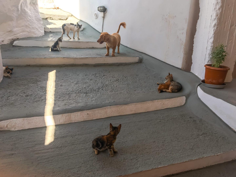 Katzen und Hunde vor dem Minimarkt in Manolas in entspannter Atmosphäre