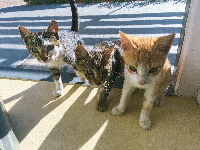 Reisen ins Abenteuer -kleine Kätzchen in Syros